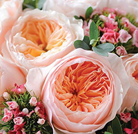 Lời bài hát Những bông hoa những bài ca