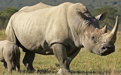 Wildlife Animals Vocabulary