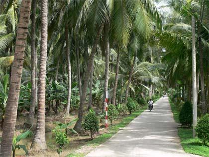 Tả cây dừa quê em