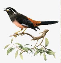Tranh tô màu các loài chim