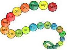 Lý thuyết Peptit và Protein: Tính chất hóa học, Tính chất vật lí, Đồng phân, Danh pháp