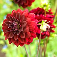 6 loại hoa Tết cổ truyền mọi gia đình đều nên có