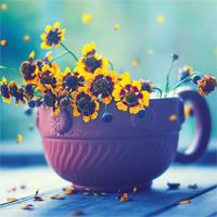 Nhành hoa rụng rơi Lyrics