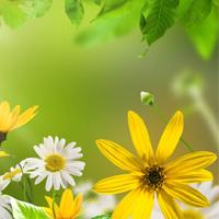 Giải vở bài tập môn Tự nhiên xã hội 3 bài 10: Hoạt động bài tiết nước tiểu