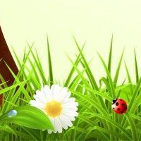 Giáo án Tự nhiên xã hội 3 bài 68: Ôn tập tự nhiên